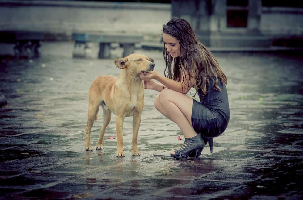 empath/sympath comforting dog in the rain
