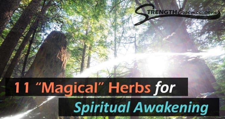 spiritual awakening herbs